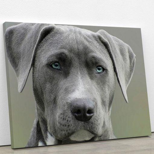 tableau-photo-dogue-allemand-chien