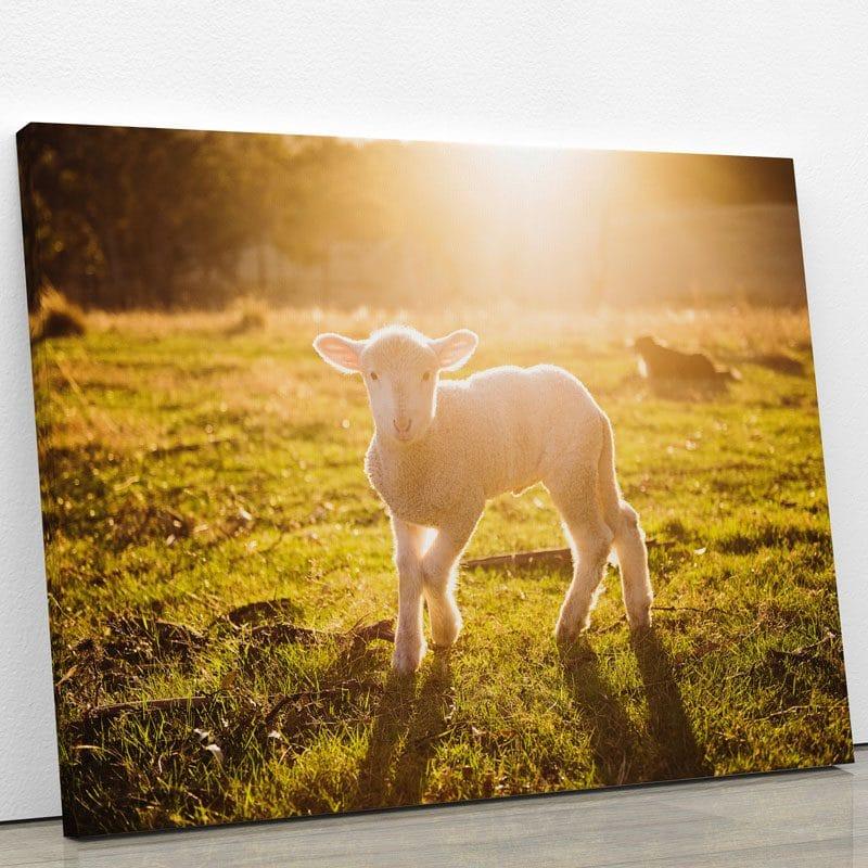 tableau-agneau-mouton-tableau-animaux-decoration-murale-artetdeco