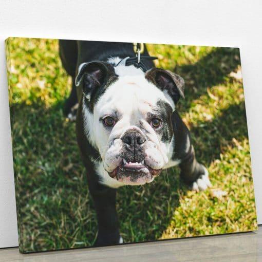 tableau bulldog bouledogue