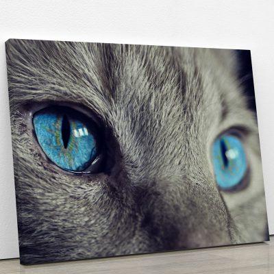 tableau-chat-gris-yeux-bleus