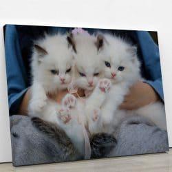 tableau chaton blanc