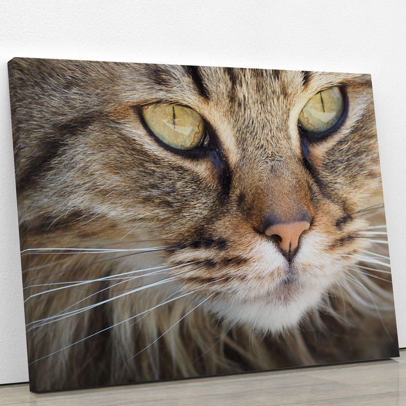 tableau chat gris portrait