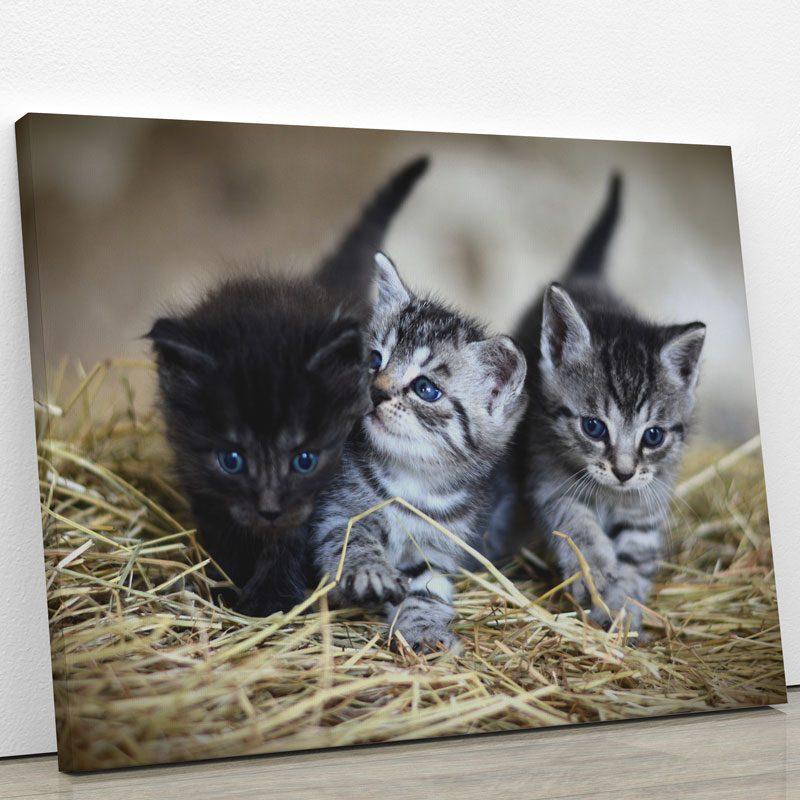 tableau chaton noir gris blanc
