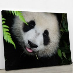 tableau-panda-deco-murale-decoration-artetdeco.fr