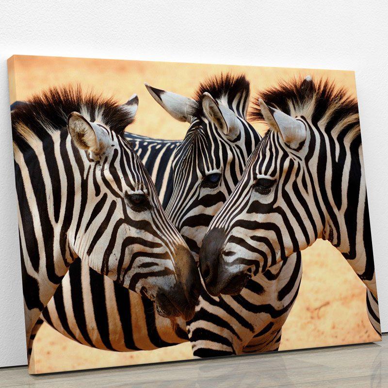 tableau photo 3 zebres colore