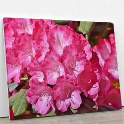 rhododendron-tableau-decoration-florale-murale-poster-artetdeco