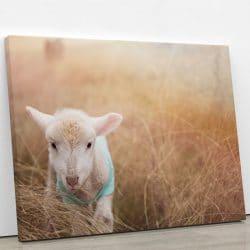 tableau-agneau-decoration-animaux-deco-murale-poster-toile-photo-artetdeco
