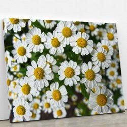 tableau-camomille-fleur-decoration-florale-artetdeco