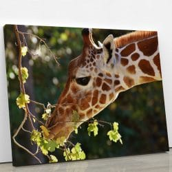 tableau-girafe-deco-murale-chambre-artetdeco.fr