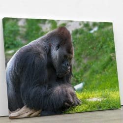 tableau-gorille-singe-animaux-deco-murale-artetdeco.fr