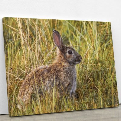 tableau-lapin-sauvage-animaux-decoration-chambre-artetdeco.fr