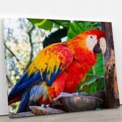 tableau-perroquet-animal-deco-decoration-murale-artetdeco.fr