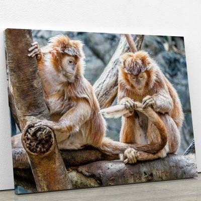 tableau-petit-singe-animaux-deco-murale-artetdeco