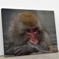 tableau-singe-macaque-japonais-animaux-decoration-murale-artetdeco