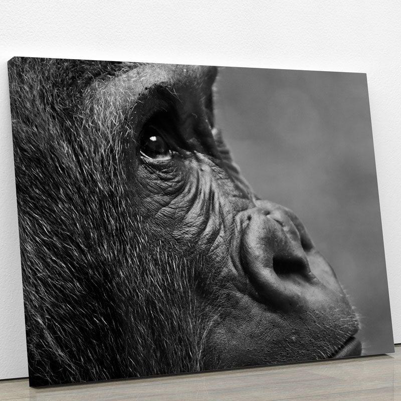 tableau-singe-noir-et-blanc-animaux-decoration-murale-artetdeco